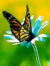 бабочка сверху белом цветке